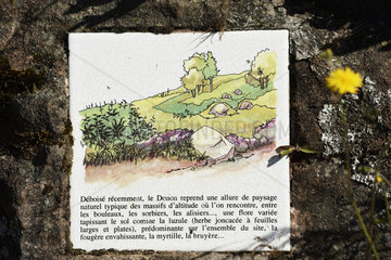 Rock with information panel on the landscape and the flora  mountain ash  top of Donon  Hautes Vosges  Bas Rhin  France