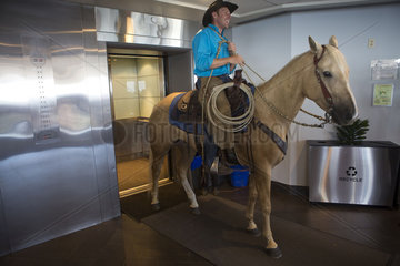 david cowley on horse in elevator