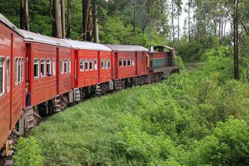 Train crossing the tea plantations  Sri Lanka