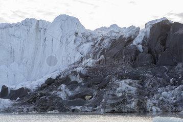 Polar bear (Ursus maritimus) young in moraine of Bodley Glacier  Nordaustlandet  Spitzberg  Svalbard.