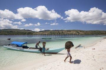 Agar Agar Seaweed carrying- Kangge Island Alor Indonesia