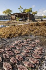 Fish and Agar Agar Seaweed drying - Kangge Island Indonesia