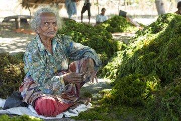 Agar Agar Seaweed sorting - Kangge island Alor Indonesia