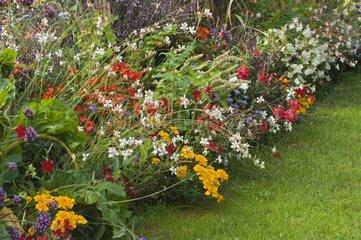 Mixed-border d'annuelles d'été dans un jardin