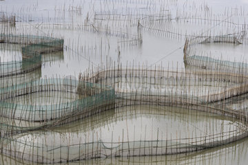 Cages with nets for raising fish in open sea  Fish Farming  Xiapu County  Fujiang Province  China