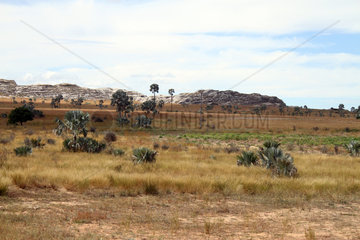 Landscape in the country Tsimihety  Province of Tulear  Madagascar