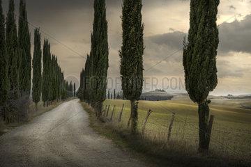 Cypres tree-lined avenue  road to the farmhouse  Asciano  Siena  Tuscany  Italy