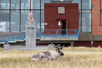 Svalbard reindeer (Rangifer tarandus platyrhynchus) in front of the bust of Lenin in the abandoned mining town of Pyramiden  Spitsbergen