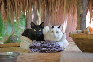 Black cat and black and white cat lying in a basket