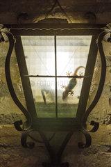 Mediterranean House Gecko (Hemidactylus turcicus). Hunting at night inside a wall lantern. Environs of the Ebro Delta Nature Reserve  Tarragona province  Catalonia  Spain.
