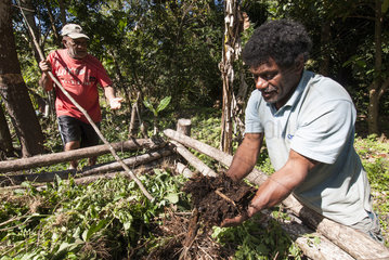 Amede Moto holding compost in hand. Tribe of Gohapin. New Caledonia.