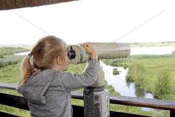 Observation with binoculars birds by a girl in the Marais Vernier at the Grand-Mare in the Regional Natural Park of the Loops of the Seine Normande (27)  France