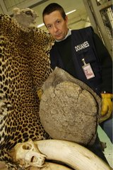 Seizure of a fraudulent hunting trophies to customs France