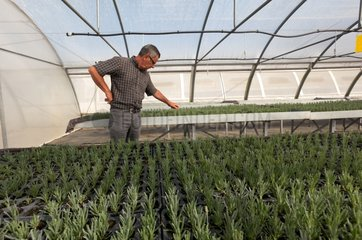 Research on dying lavender in France