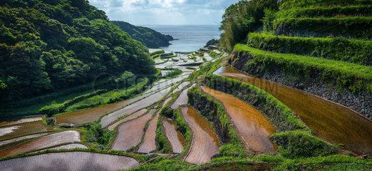 Hamamoura 's rice field  Japan