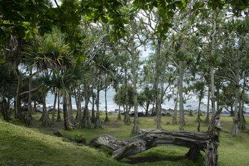 Puits des Anglais  Wild south  Reunion island