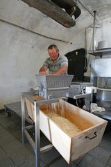 Salers cheese making Monts du Cantal Auvergne France