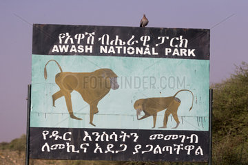 Sign announcing the presence of Baboon hamadryas or Hamadryas (Papio hamadryas)  possibly along the road  Awash  Rift Valley  Ethiopia  Africa