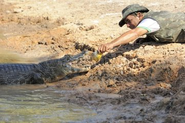 Fisherman taming a Caiman Pantanal Brazil