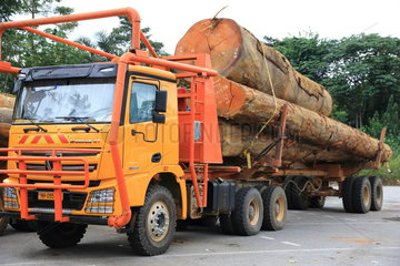 Tropical forest exploitation  Gabon