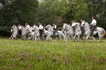 Abrivado in a meadow Ayguières Camargue France