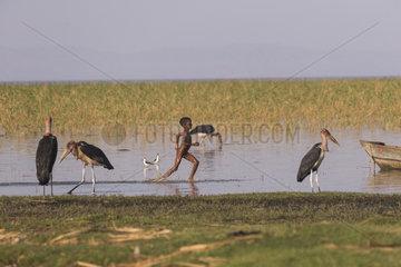 Marabou stork (Leptoptilos crumenifer) and running child  Ziway lake  Rift Valley  Ethiopia
