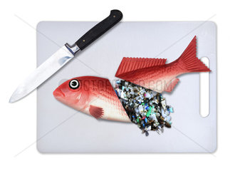 Plastic fish food. Concept image of a fish cut in half with a knife and spilling microplastics from within. The image is intended to illustrate the problem of pollution of the oceans by plastic garbage. We are eating plastic on our seafood. Contaminated fish and shellfish have been found everywhere from Europe  Canada and Brazil to China ? and plastic-eating fish are now showing up in supermarkets. While most plastic has been found in the guts of fish  and would therefore be removed before eating  some studies have warned that microplastics  particularly at the nanoscale  could transfer from the guts to the meat (and  of course  we eat some species of small fish and shellfish whole). There is growing concern about toxins leaching ? laboratory tests have shown that chemicals associated with microplastics can concentrate in the tissues of marine animals. Some commercially important species have seen the majority of their population affected. It confirmed that contamination has been recorded in tens of thousands of organisms and more than 100 species. Last year  the European Food Safety Authority called for urgent research  citing increasing concern for human health and food safety given the potential for microplastic pollution in edible tissues of commercial fish. Portugal