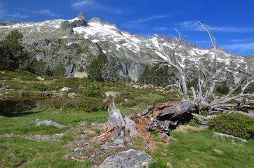 Dead tree - Reserve Neouvielle Pyrénées France