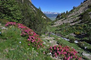 Nature Reserve Eyne - Pyrenees France