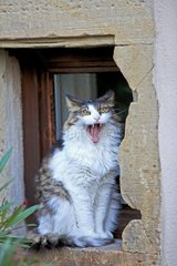 Cat sitting in a window recess - France
