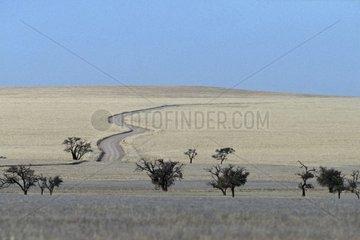 Track in desert zone Namib Namibia