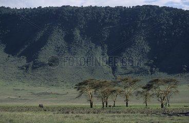 African elephant in the savanna of Tanzania