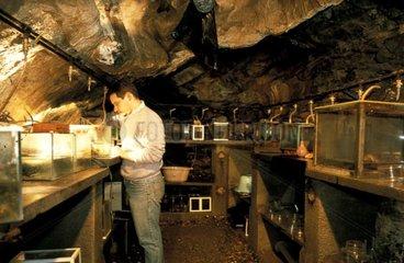 Salle des Euproctes du laboratoire souterrain de Moulis