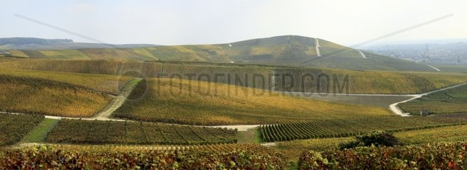 Autumnal vines on Aÿ-Champagne township Marne France