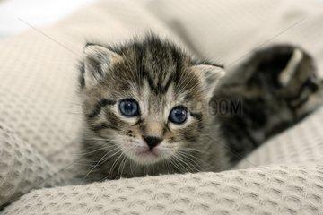 Kitten on a pillow