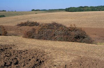 Hedge torn off to increase the agricultural piece France