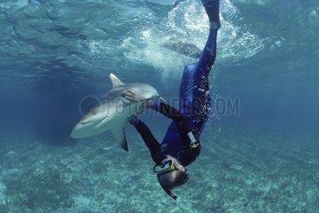 Requin de récif et plongeur Bahamas Grandes Antilles