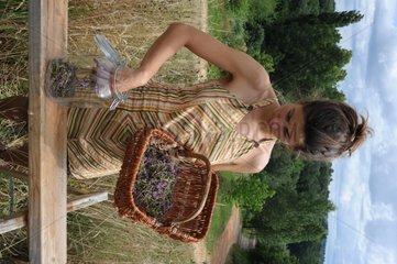Making of wild thyme oil in a garden