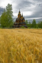 Stave Heddal and grain fields Norway