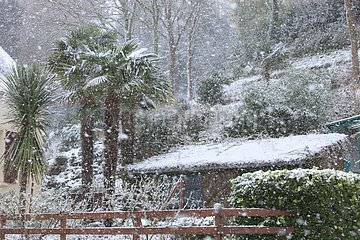 Palm trees under ths snow in a garden in Britany France