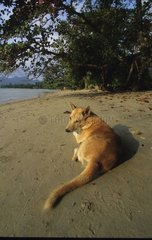Dog laid down on a sand plge in the shade of the trees