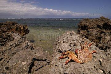 Côte rocheuse avec crabe Ouvéa Iles Loyauté
