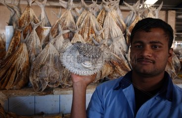 Fish market in Dubaï United Arab Emirates