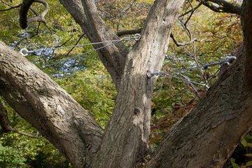 Stands under branches of a hornbeam in a garden