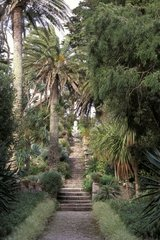 Staircases hones some in a garden with Palm trees