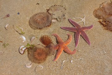 Marine invertebrates collected by children on the beach