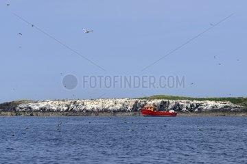 Boat on Inner Island - Farne Islands England UK
