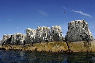 Pinnacles Staple Island - Farne Islands England UK