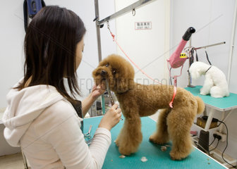 dogtrim salon in Hongkong