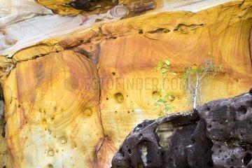 Iron oxides in the sandstone beach Bako - Malaysia